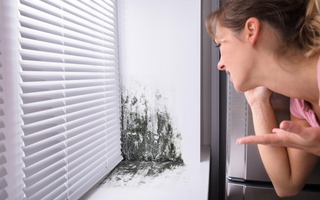 prevent mold growth in the home